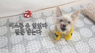 강아지와 이소룡 옷, 그 참을 수 없는 용맹함