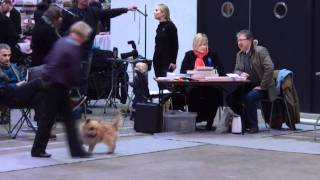 Dkk Fredericia 11. Februar 2012 Cairn Terrier Aaben Klasse Han - Del 3 Af 3