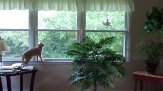 Cat Frustrated With Squirrel On Bird Feeder