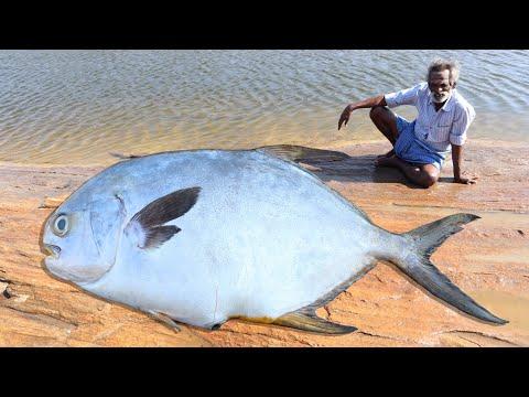 BIG FISH !!! Fish Finger Prepared By My Daddy ARUMUGAM / Village food factory