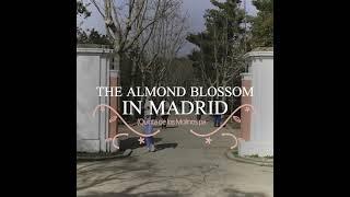The almond blossom in Madrid - Quinta de los Molinos Park