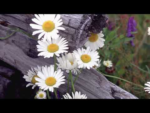 """Peaceful Music, Relaxing Music, Instrumental Music """"My Mountain Home"""" by Tim Janis"""