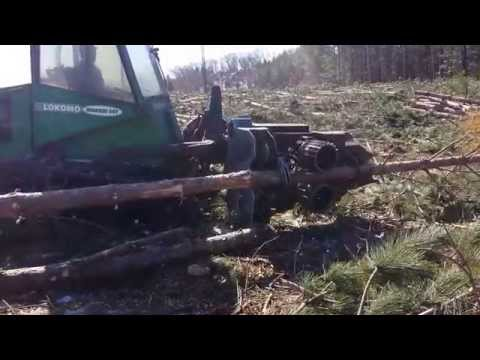 Fastest tree harvester in the world