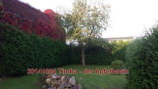 20141004 Timba, der Apfelbaum muss weg!