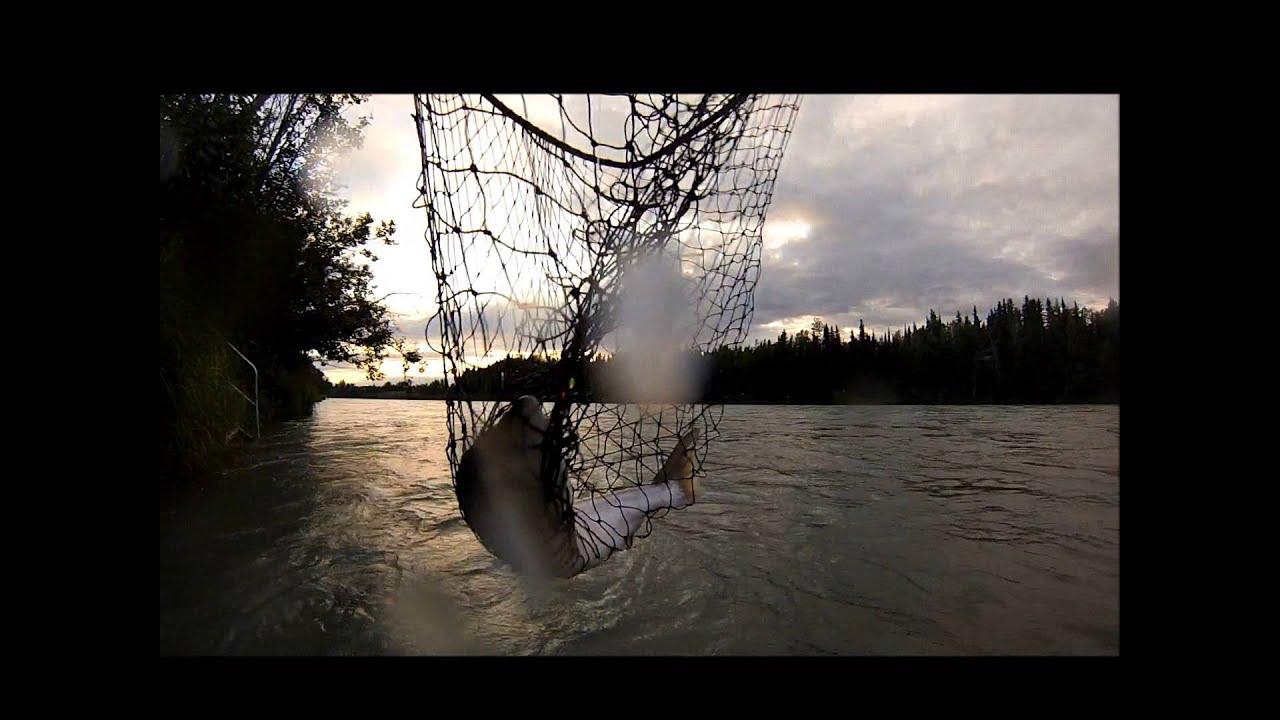 Sockeye salmon fishing kenai alaska 2015 youtube for Kenai river fish counts