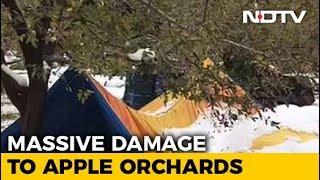 Heartbreaking Video Tells The Tragic Tale Of Kashmir's Apple Growers