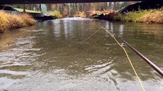 Accidental Silver Salmon Catch While Fishing For Dolly Varden, Campbell Creek, Anchorage, Alaska