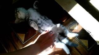 Котенок спит ( Прикол, Юмор 2016, Смешное видео)