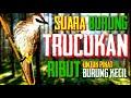 Trucukan Ribut Untuk Pikat Burung Kecil  Mp3 - Mp4 Download