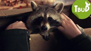 Zorros Rückkehr (Folge 60) | Tiere bis unters Dach | SWR Kindernetz
