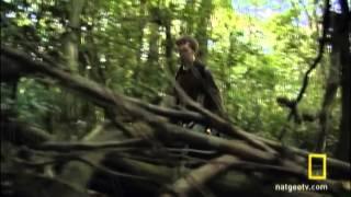Orman Kamerası