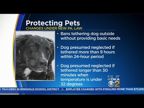 Colder Weekend Temps Could Put New Animal Cruelty Law To The Test
