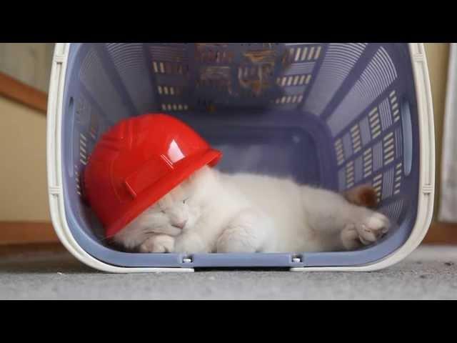 のせ猫 x 赤いヘルメット Red helmet and cats