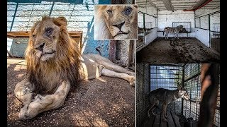 Animals are rescued from 'zoo from hell' in Albania - Daily News
