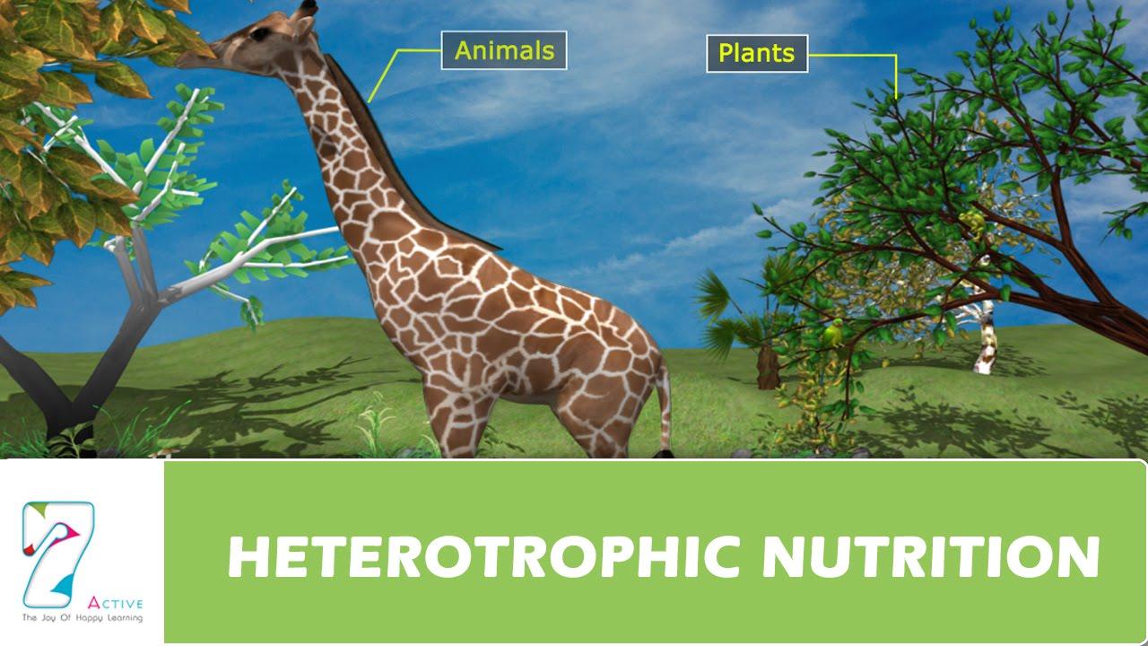 HETEROTROPHIC NUTRITION - YouTube