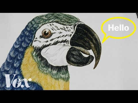 Why parrots can talk like humans