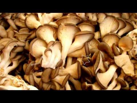 энергетическая ценность гриба вешенка
