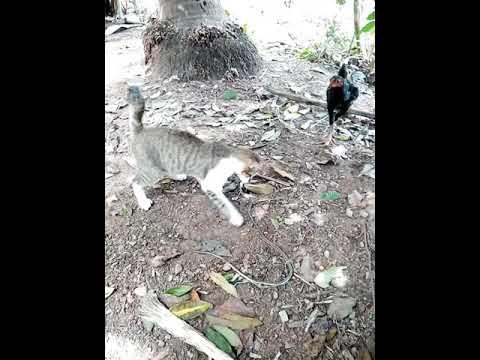 Funny Cat Attack Snake