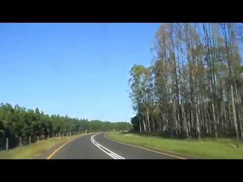 Australian Blue Gum Tree Monoculture Plantations (Northeastern South Africa, MVI 3191)