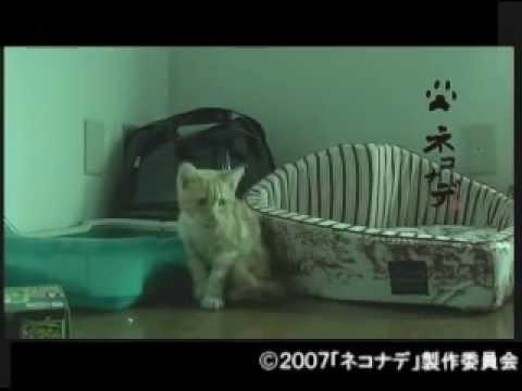 連続テレビドラマ ネコナデ