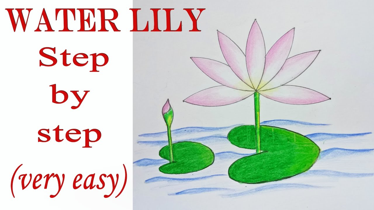 How to draw a lily in stages 96