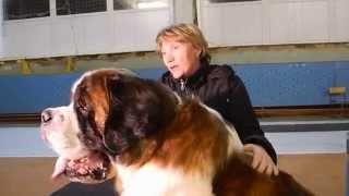 Всероссийская выставка собак «DOG – Бийск 2014 – Осень» ч.2