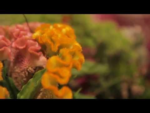 Elisma Rose 'A day as a florist'