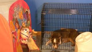 Pinky Pie Quarantined Day 6: Brownies