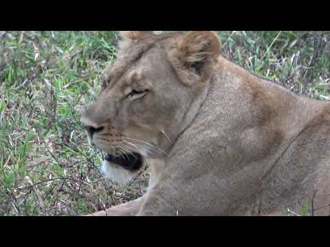 Malawi first wildlife experience part one