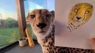 Рисуем вместе с Гепардом Гердой /drawing with the cheetah @I_am_cheetah