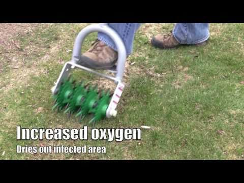 How to - Plant grass seed to repair winter grass damage