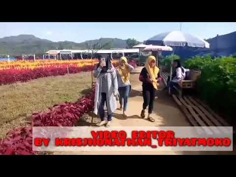 wisata taman bunga asmara - loano purworejo - YouTube