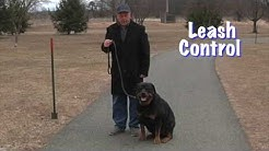 Dog Obedience Training - Leash Control - Beezer Boy Dog Training Albany NY 2019