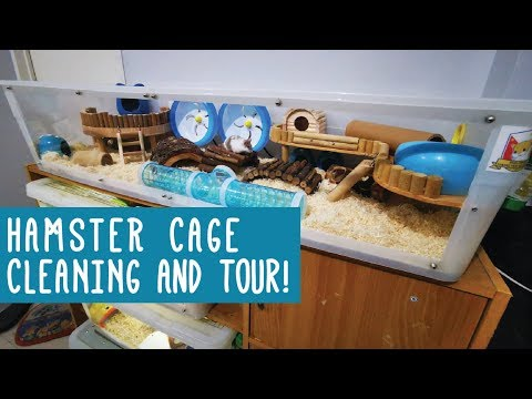 Hamster Cage Cleaning, Set up, and Tour   Frankenstein Bin Cage