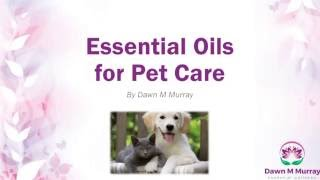 Essential Oils for Pet Care; Natural Health and Wellness for Your Pets