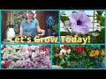 Download Seed Starting How to Grow from Seed Wave Petunias- Pansies-Polka Dot Plant MP3 song and Music Video