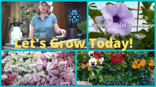 Seed Starting How to Grow from Seed Wave Petunias- Pansies-Polka Dot Plant