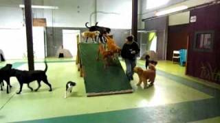 Canine Adventure Den Daycare Vancouver