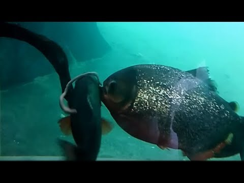 Hungry Alien Ocean. Planet Earth III 3D HD Mesmerizing Jaw Dropping Underwater Hunt Documentary