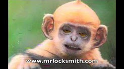 Mr. Locksmith Fun Video Monkey Endorsement Picking Locks