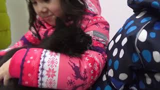 Прививка для кошки