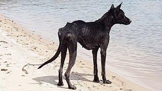 Terk edilmiş Bir Adada Bu Köpeği Buldu, Kurtarmaya Gittiğinde İse Bir Sürpriz Oldu.