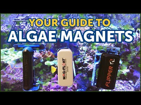 The Best Magnetic Algae Cleaners And How To Choose The Right One For Your  Aquarium
