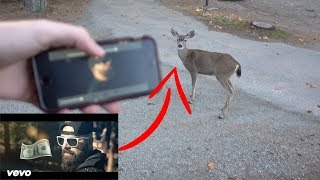 Wild Animals react to KEEMSTAR - Dollar In The Woods! (Official Music Video) *NOT CLICKBAIT*