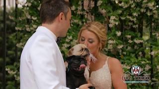 Dog Tired Wedding Nanny  (Short Version)