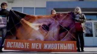 «Животные — не одежда» 2015, Смоленск 4.10.2015
