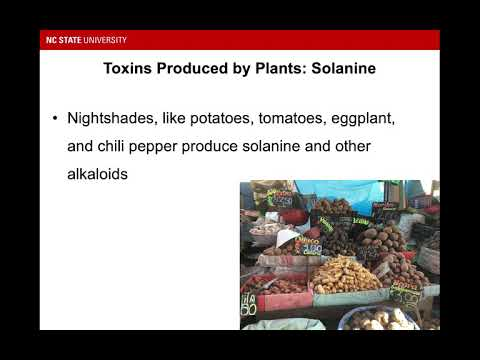 Food Toxicology: Plant Toxins