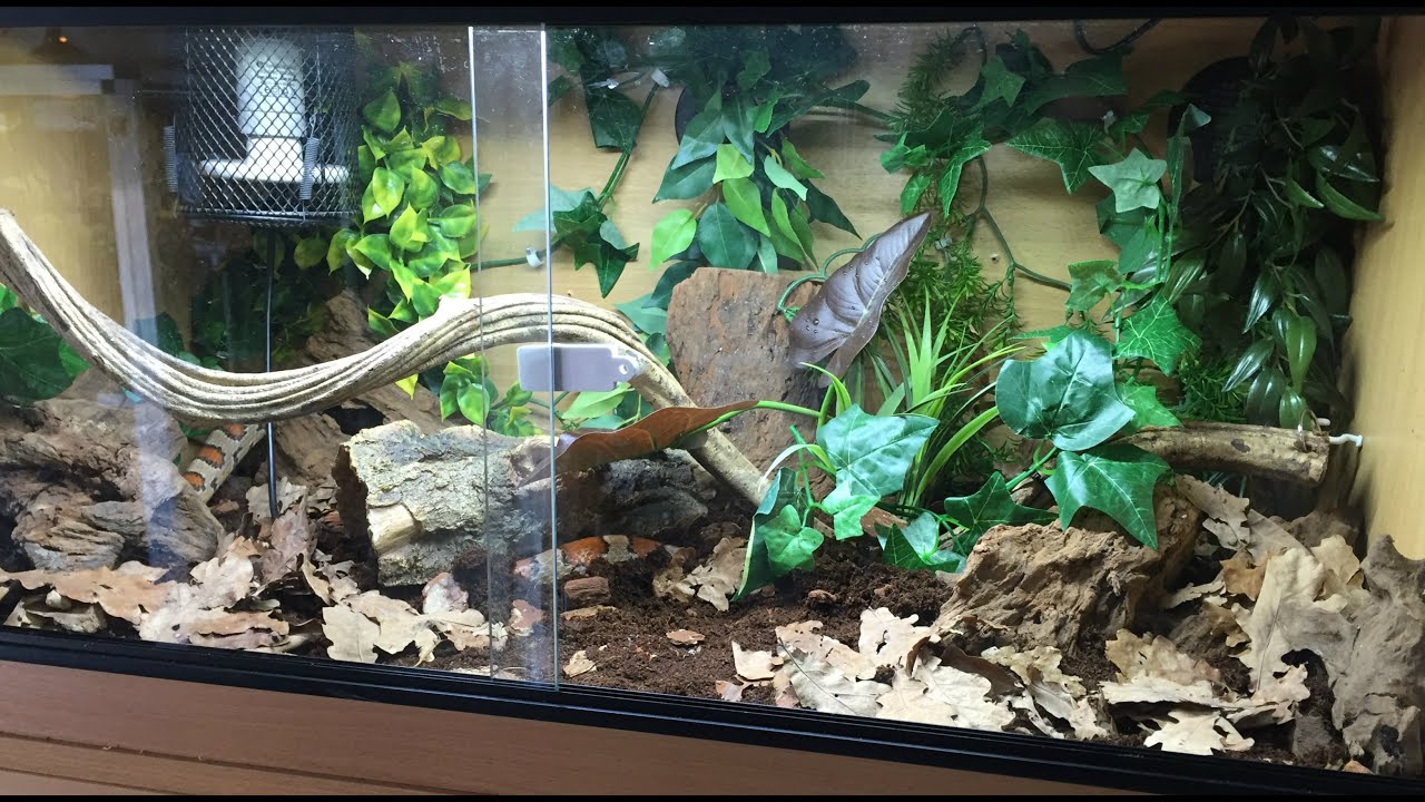 My Corn Snake Bioactive Setup Youtube