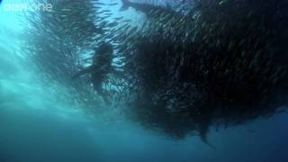 HD: Underwater Armageddon - Nature