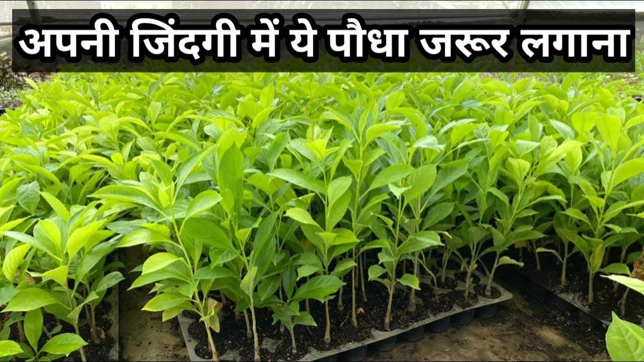 जिंदगी बदल देने की शक्ति है इस एक पौधे में !